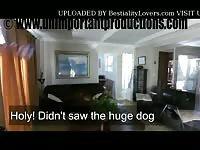 My friendly dog - Zoo Porn Sex