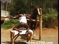 Ebony beauty makes love to horse in open air