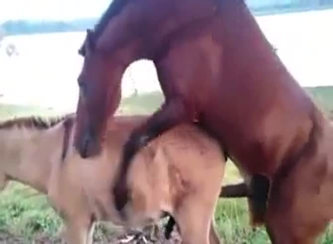 Anal horse fuck Screaming and