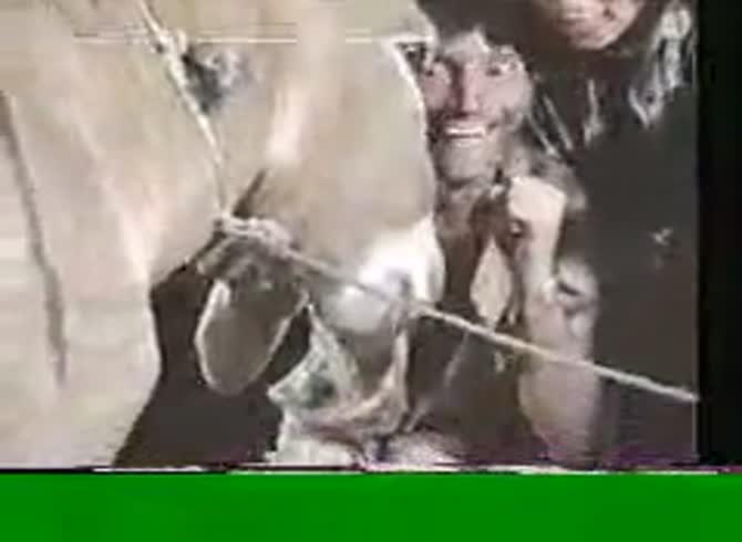 Cumshot donkey Ebony ssbbw