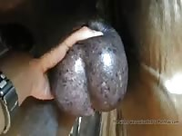 Horse Balls 1 Gay Beast Com - Beastiality Sex Movie