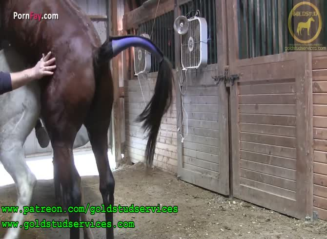 Horse sex active pony