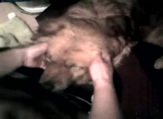 Three Guy Fuck Dog Gaybeast Com Beastiality Sex Video Katitube