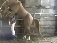Man And Horse 1 Gaybeast - Bestiality Sex Video