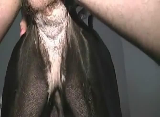 Porno animal Porn Zoo