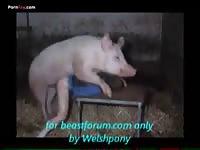 Pig Fucks Man Ass