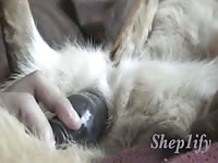 Sheppy Toy Play Gaybeast - Animal Sex Video
