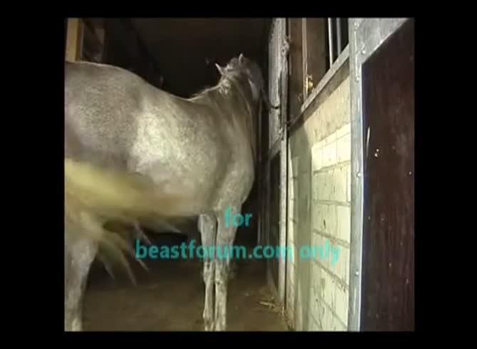 Fuck man horse Explore the