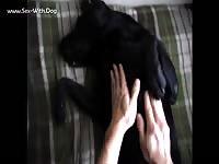 Aluzky gives bellyrub 1 aluzky home made videos dog lover german shepherd