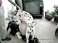 Homemade dogsex movie 66