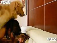 Art of zoo meet pamela [ Art Of Zoo - Animal xxx ]