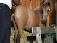 Beautiful sex of man and horse petlust