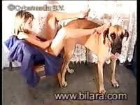Bilara