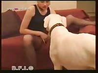 Dog Animal Zoo Vol 106