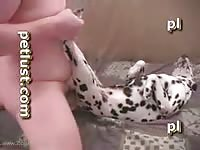 Dog Spotted Heat Man Fucking Young Female Dalmation Dog Zoophilestracker