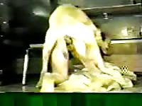 Woman gets mounted and fucked in bestiality porn