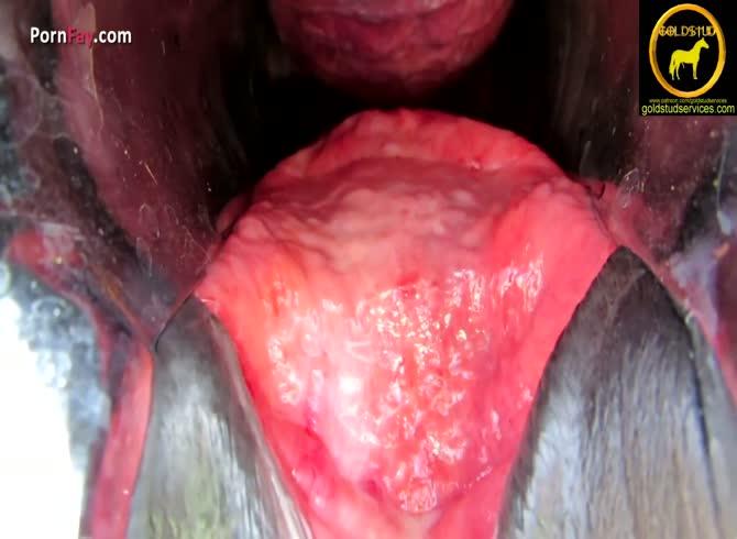 Vagina orgasm horse Shy girl