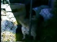 Whore having animal sex in the pen