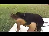 Rotweiler fucking his owner outdoors zoophilia