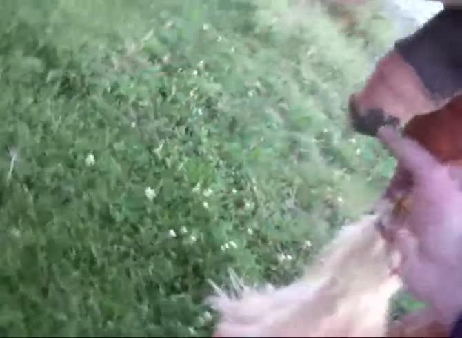 Biggest Horse Cock
